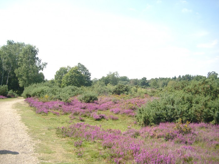Silchester Common